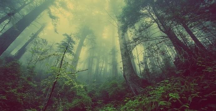 sudamerica pierde hectareas de bosque