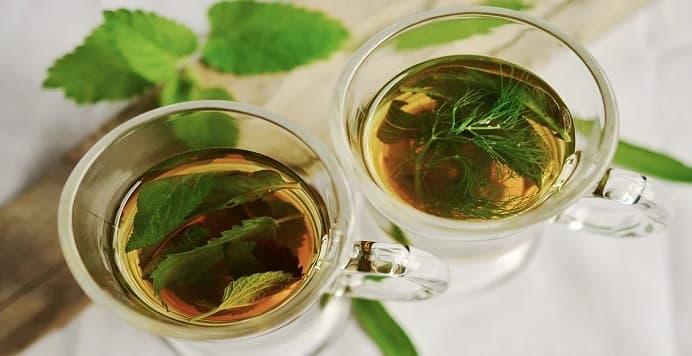 plantas medicinales contra infecciones