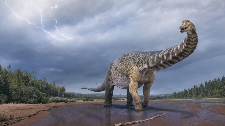 Australotitan cooperensis: nuevo dinosaurio de titanio de Gondwana