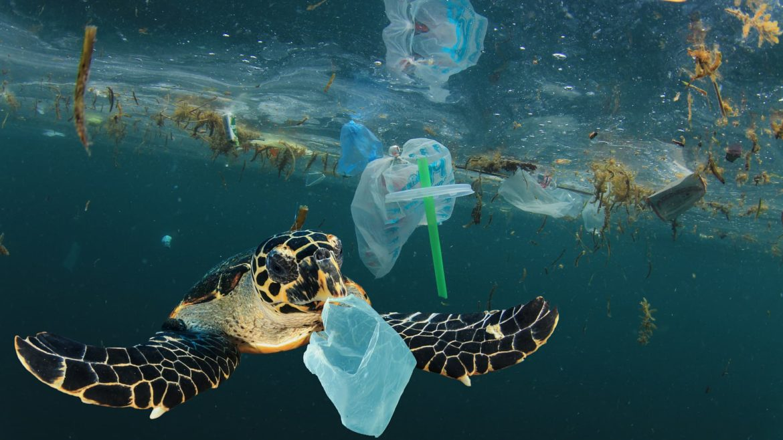 El plástico debe evitarse lo más rápida y completamente posible