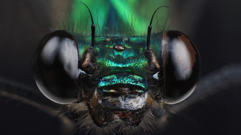 Biodiversidad: insectos que mueren a causa de las represas: espectro de la ciencia
