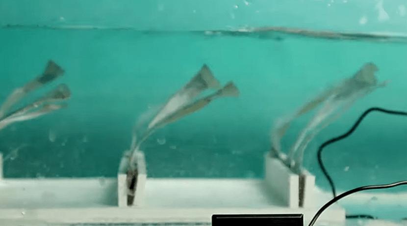 Las algas como modelo para centrales eléctricas subacuáticas triboeléctricas